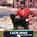 Nuova cucciolata  di Deutscher Jagd Terrier