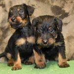 Nuove foto dei cuccioli nati in ottobre
